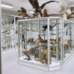 Täytettyjä eläimiä Terranova näyttelyssä